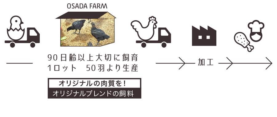 飼育の流れ